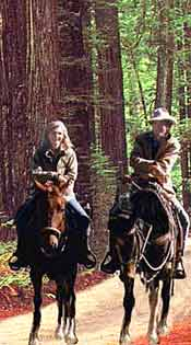 People on horseback riding through the redwoods